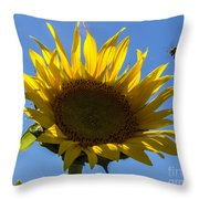 Sunflower For Snack Throw Pillow