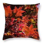 Sunlight Autumn Leaves Throw Pillow