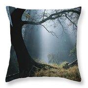 Sunlight Beams Through The Treetops Throw Pillow