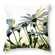 Sunlight Behind The Daisies Throw Pillow