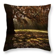 Sunlight In Trees Throw Pillow