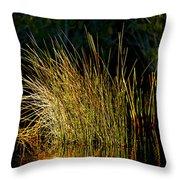 Sunlight On Grass Merritt Island Nwr Throw Pillow