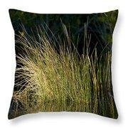 Sunlight On Grass Original Throw Pillow