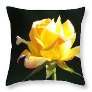 Sunlight On Yellow Rose Throw Pillow