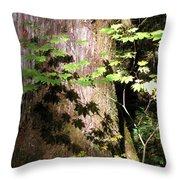 Sunlight Reaching The Forest Floor Throw Pillow