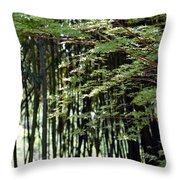 Sunlit Bamboo Throw Pillow