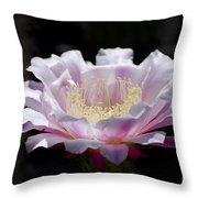 Sunlit Cactus Flower Throw Pillow