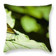 Sunlit Dragonfly Throw Pillow