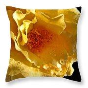 Sun Rays On The Yellow Petals Throw Pillow