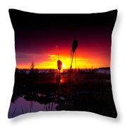 Sunset Cat Tail Throw Pillow