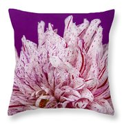 Sunset Dahlia 1 Throw Pillow