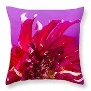 Sunset Dahlia 2 Throw Pillow