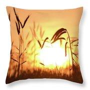 Sunset Rye IIi Throw Pillow