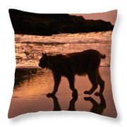 Sunset Stroll Throw Pillow