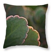 Sunset Succulents Throw Pillow