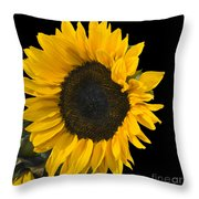 Sunshine In The Night Throw Pillow