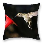 Sunshine On Hummingbird Throw Pillow