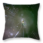 Sunshine On Swamp Spider Throw Pillow