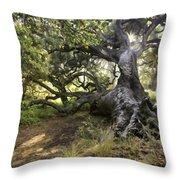 Sunstar Oak Throw Pillow