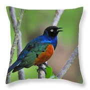 Superb Starling Throw Pillow