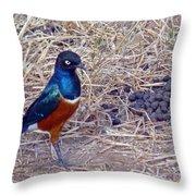 Superb Starling Throw Pillow