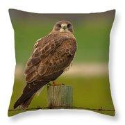 Swainsons Hawk Throw Pillow