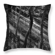 Swamp At Sunset Throw Pillow