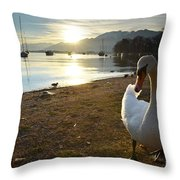 Swan On The Beach Throw Pillow