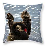 Swan Preening Its Feathers Throw Pillow