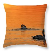 Swans In Early Light  Throw Pillow