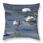 Swans On The Ice Along The Tagish Throw Pillow