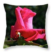 Swarthmore Throw Pillow