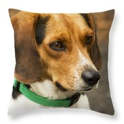 Sweet Little Beagle Dog Throw Pillow