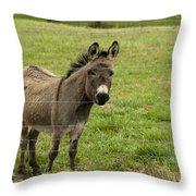 Sweet Little Donkey Throw Pillow