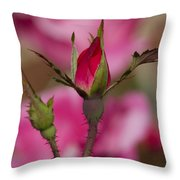 Sweet Little Rosebud Throw Pillow