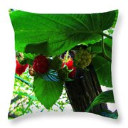 Sweet N Juicy Throw Pillow