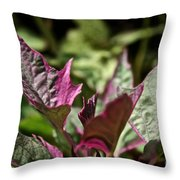Sweet Potato Vine Throw Pillow