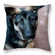 Sweet Spanish Pup Throw Pillow