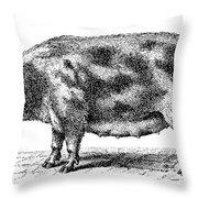 Swine Throw Pillow