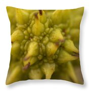 Sycamore Seed Pod Throw Pillow