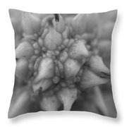 Sycamore Seed Pod In Black Throw Pillow