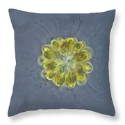 Synura Algae, Lm Throw Pillow