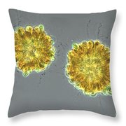 Synura Uvella Colonies, Lm Throw Pillow