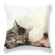 Tabby Kitten And Bichon Fris� Throw Pillow