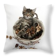 Tabby Kitten In Potpourri Basket Throw Pillow