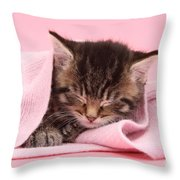 Tabby Kitten Throw Pillow