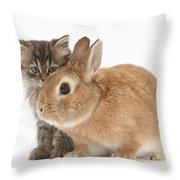 Tabby Kitten With Sandy Throw Pillow