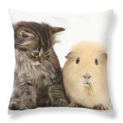 Tabby Kitten With Yellow Guinea Pig Throw Pillow