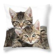 Tabby Kittens Cuddling Throw Pillow