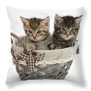 Tabby Kittens In A Basket Throw Pillow